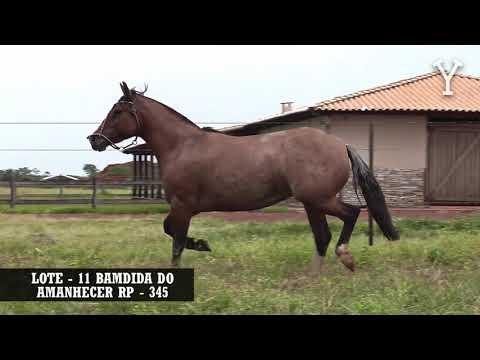 LOTE   11 BAMDIDA DO AMANHECER RP   345