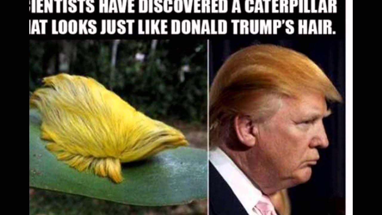 Most Hilarious Jokes 2017