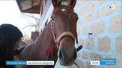 Rencontre avec des éleveurs de chevaux pure race espagnole dans les Ardennes