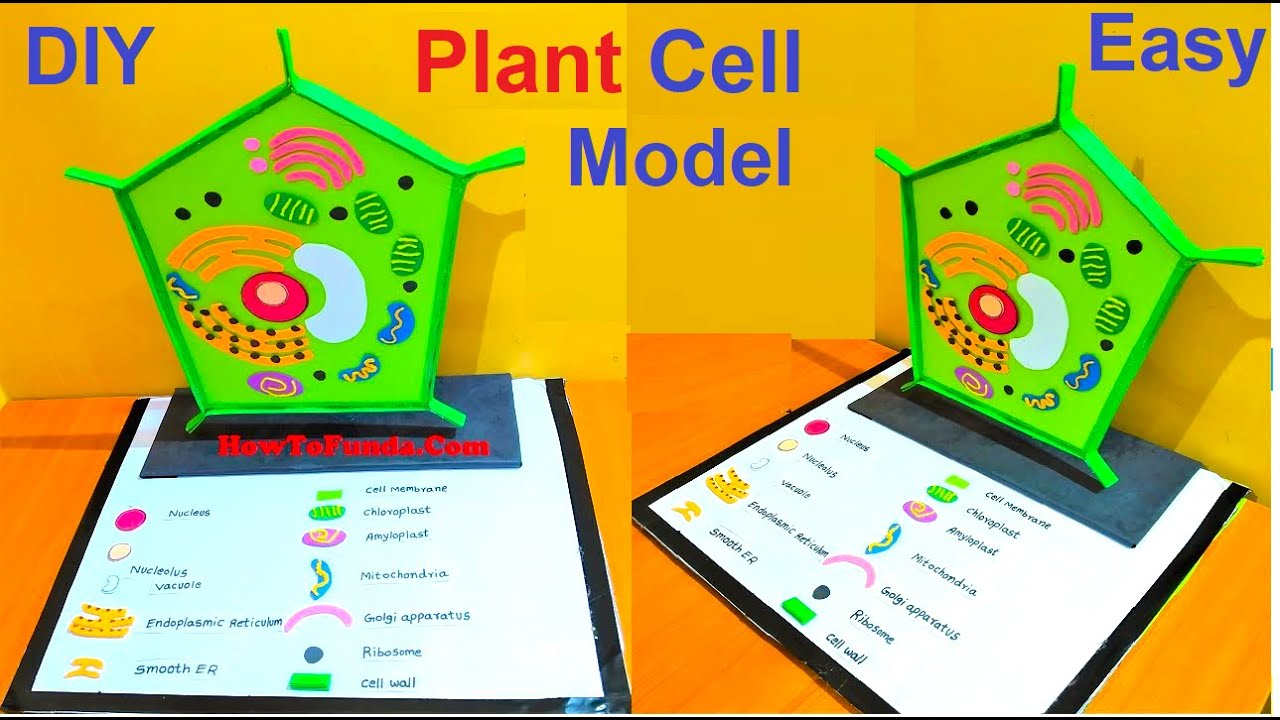 plant cell model making for school science fair project ...