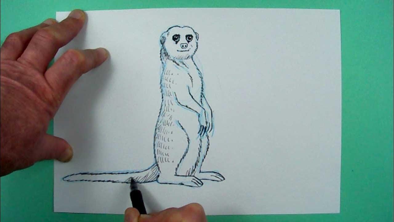 Wie zeichnet man ein Erdmännchen? Zeichnen für Kinder und jedem, dem es  Spaß macht.