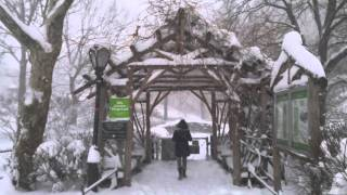 Central Park, NYC during Winter Storm Jonas (4K video)