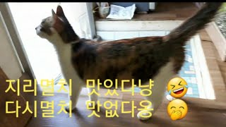 지리멸치 잘먹는 고양이