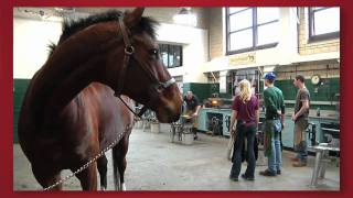 Forward thinking: Cornell Veterinary Medicine