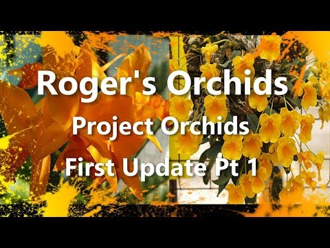 Project Orchids First Update Pt 1