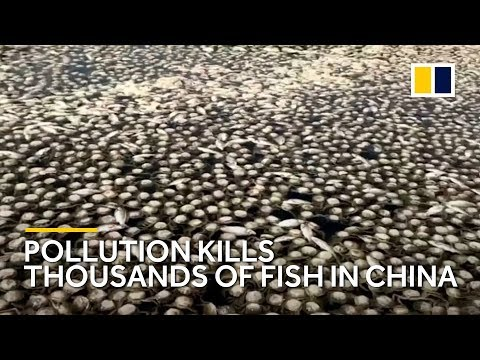 Thousands of fish killed by water pollution in Chinese lake