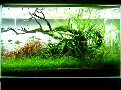 George farmer 39 s 60 litre nature aquarium youtube for Decoration aquarium 60 litres