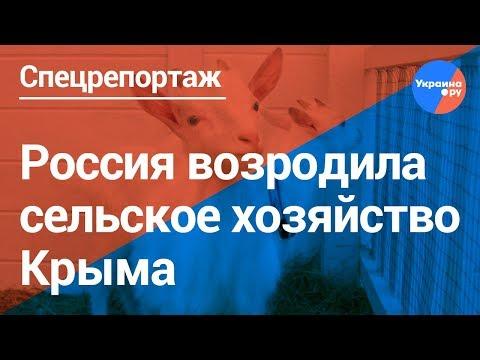 Коровы и козы Крыма получат деньги от государства