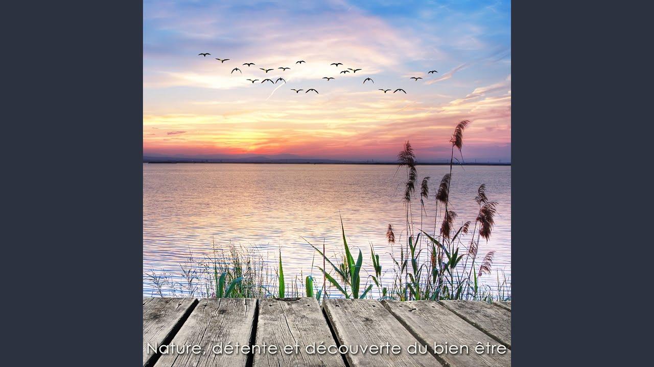 musique relaxation nature et decouverte