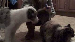 Train Your Dog To Be Calm With Your Cat