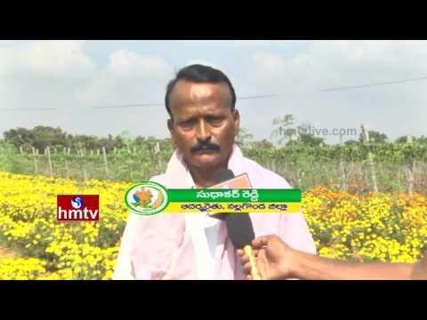 Success Story of Farmer Sudhakar Reddy   Fruits Farming   Nalgonda Dist   Nela Talli   HMTV