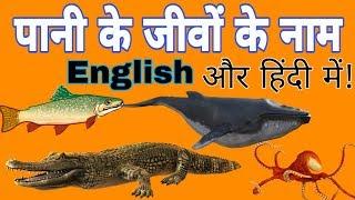 पानी के जानवरों के नाम हिन्दी और इंग्लिश में Names of water animals in Hindi and English 