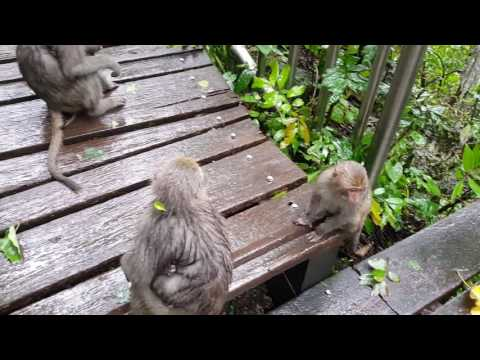 Kaohsiung Monkey Mountain