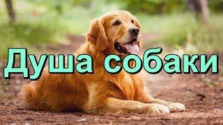 Душа собаки.