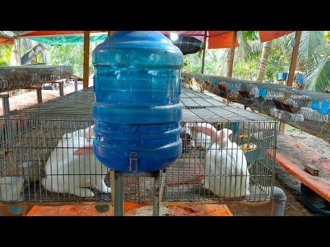 Cách làm hệ thống uống nước cho thỏ khi sử dụng văn uống tự động | Foci
