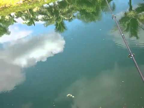 canal fishing in miami