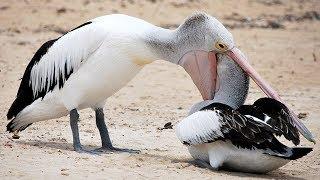 Burung Pemakan Hewan Hidup / Omnivora