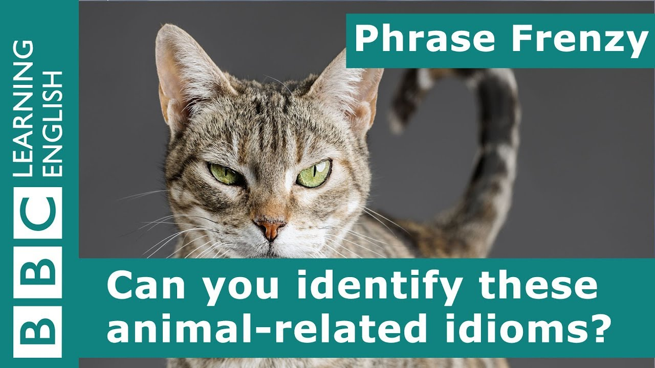 A picture quiz about idioms: Animals