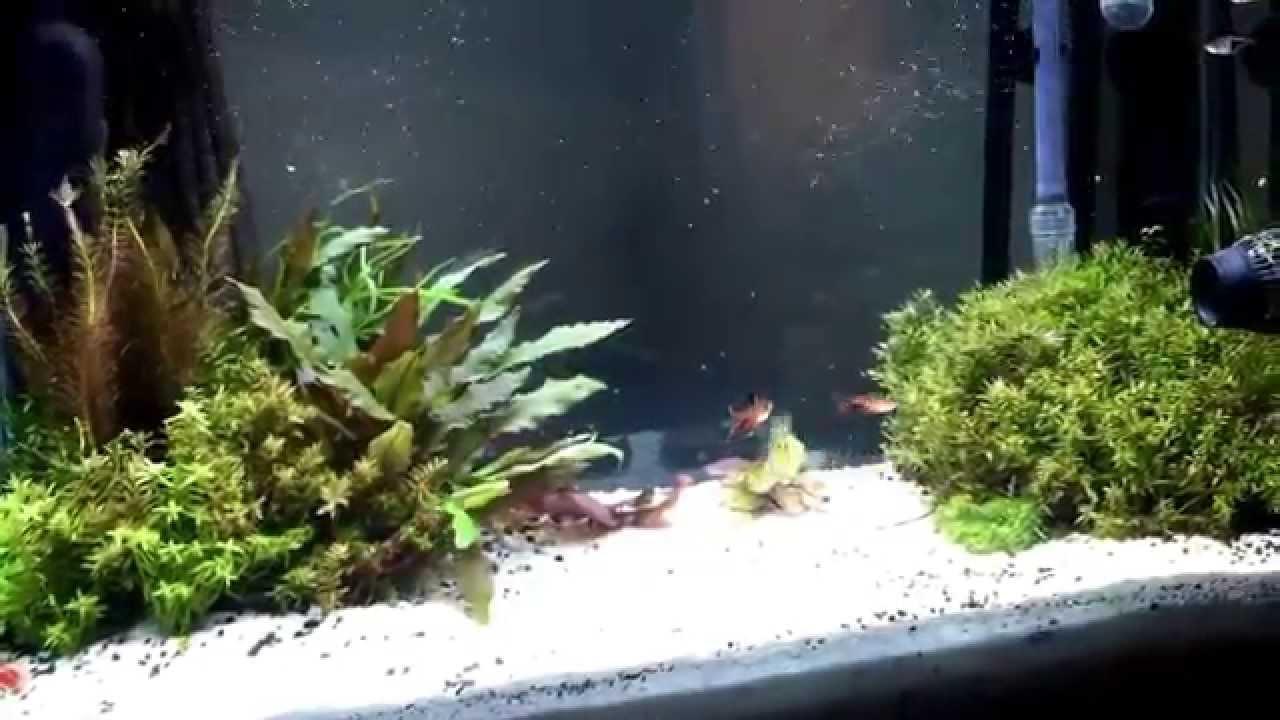Freshwater aquarium fish documentary - Fresh Water Aquarium Fish Tank Kessil Light Tropical Fish Aquarium Plants Fluval Aqueon