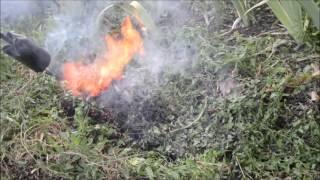 Torch vs Invasive Garden Vines