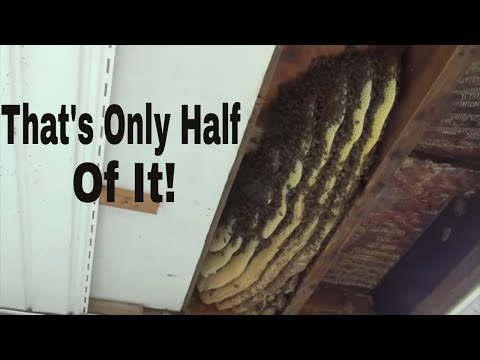 """Bees In Porch (""""Aint Nobody Got Time For That!"""")"""