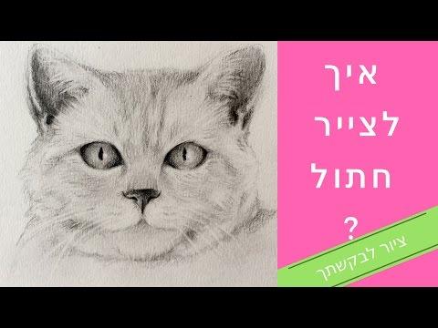 איך לצייר חתול?