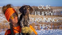Puppy Training Tips - You Ask We Answer