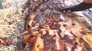 토종벌 ~벌통 목재   사후 관리는 이렇게 합니다