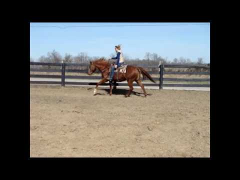 WESTERN PLEASURE TRAINED, WORKS CATTLE, & TRAIL RIDES SORREL QUARTER HORSE MARE