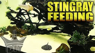 Feeding the stingrays AND fan mail!
