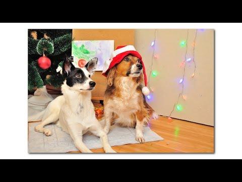 Белочка и Малыш: Новогодняя картина (Собаки-художники - Painting Dog)