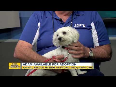 Pet of the week: Adam is a 1-year-old Maltese who would bring his cuteness overload to your home