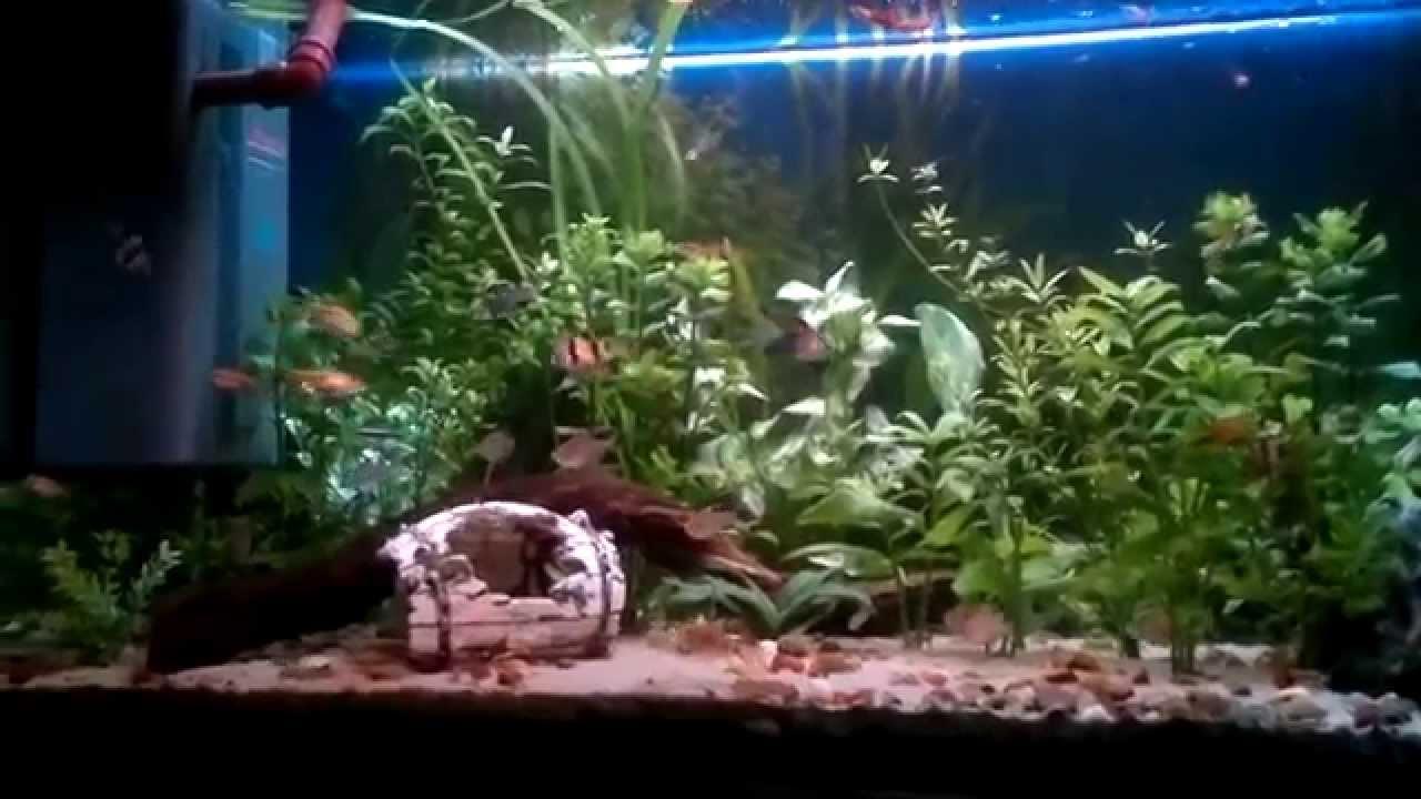 Acuario comunitario agua dulce 250 litros youtube for Acuario comunitario