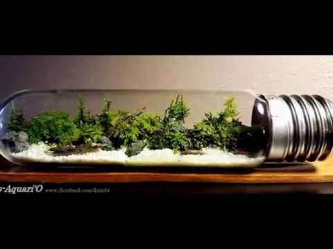diy mini terrarium bulb forest par kris aquari 39 o youtube. Black Bedroom Furniture Sets. Home Design Ideas