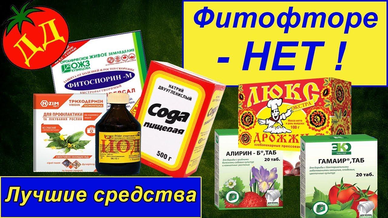 препараты от фитофторы на помидорах
