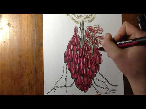 Coloring The Dripping Heart Rose Drawing