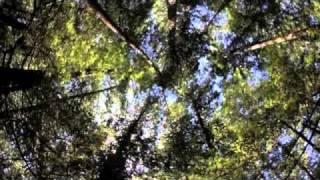 Walmart mandates zero deforestation: Week in Forests, Oct 22, 2010.m4v