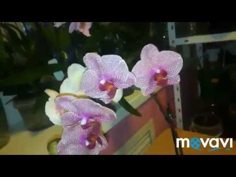 Орхидейный обзор моих красоток🌸
