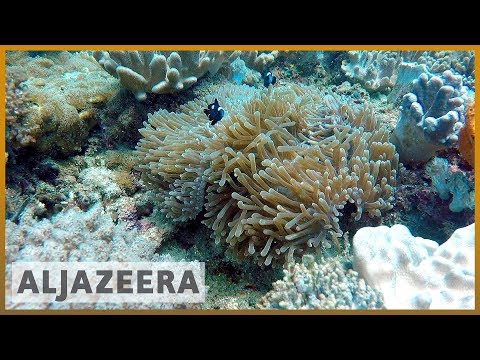 🇰🇪How do coral reefs benefit Kenya
