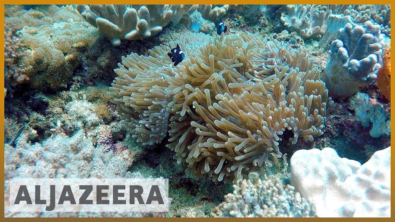 🇰🇪How do coral reefs benefit Kenya's economy? l Al Jazeera English