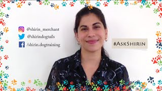 ASK SHIRIN 3! Q and A with India's pioneering canine behaviourist Shirin
