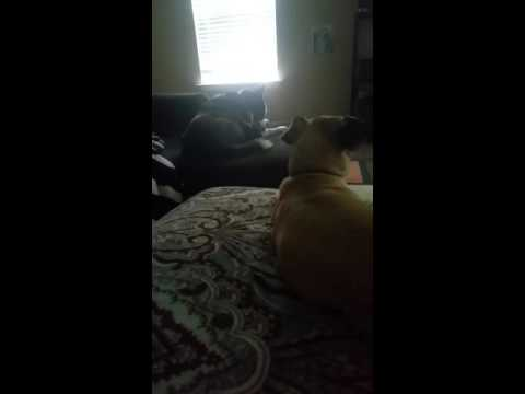 Stop A Dog Seizure.