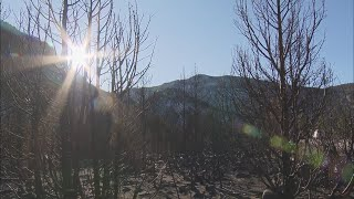 CBS4 Goes Into The Burn Areas Of The Cameron Peak Fire
