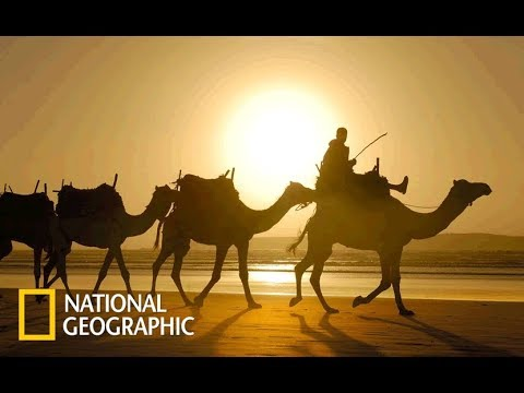 Wild Arabia - Hidden Deep In The Desert | Rains (Nat Geo Wild)