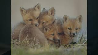 "FLEET FOXES ""Sunblind"""
