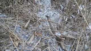 Zrzuty jelenie poroże 10tak w lodzie