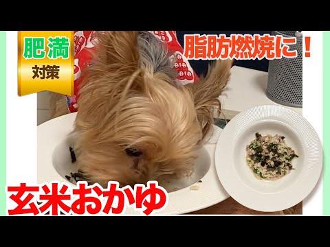 【愛犬手作りご飯】脂肪燃焼に!水分たっぷり「玄米おかゆ」