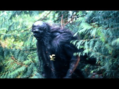 The Mysterious Origins Of The Tennessee Wildman | Sightings & Encounters