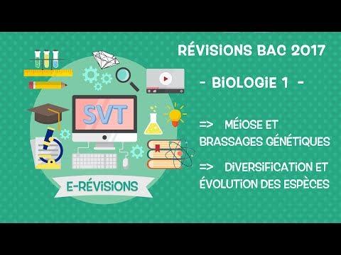 LIVE : Révisions BAC SVT 2017 : Génétique et évolution des éspèces  !