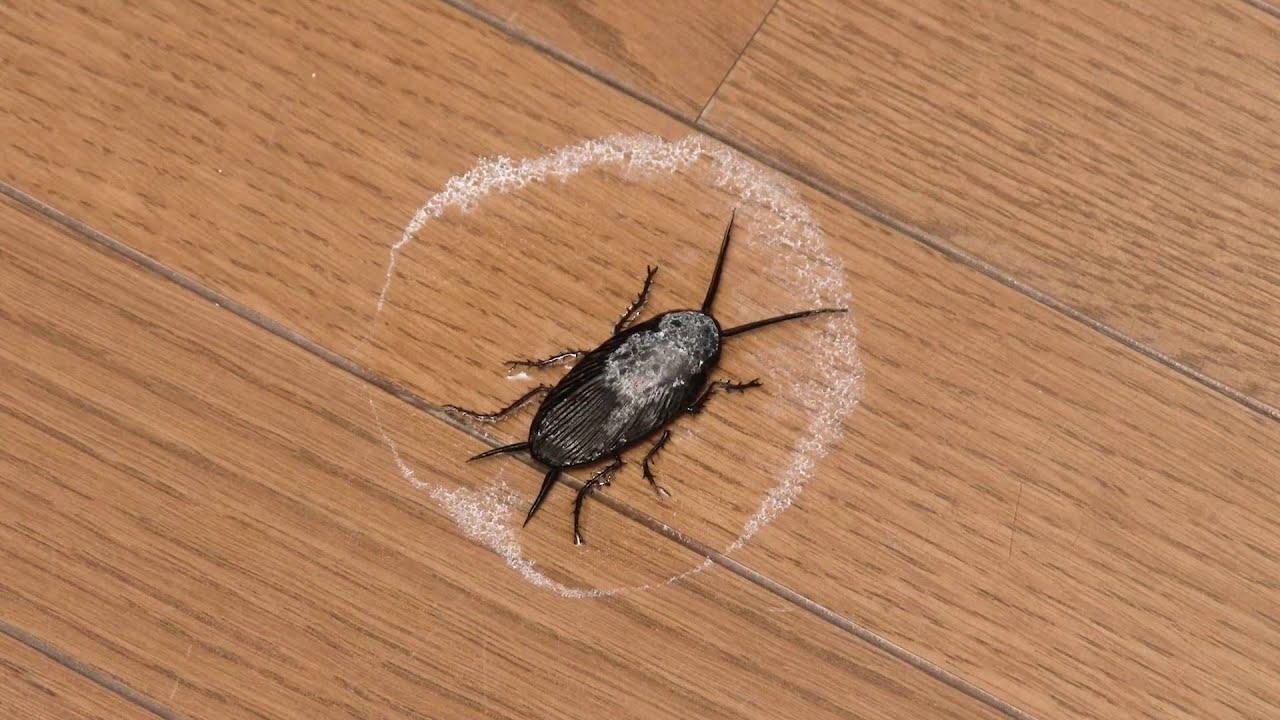 小さい やつ ゴキブリ